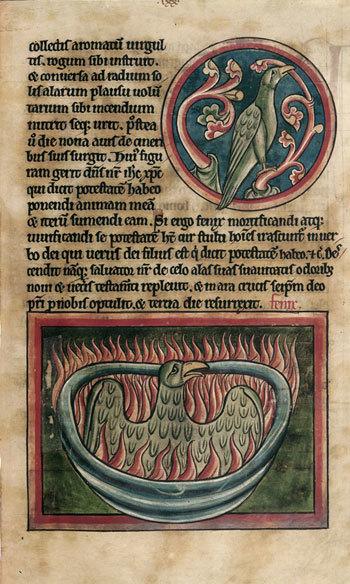 harry-potter-phoenix-rising