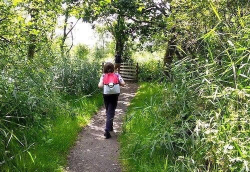 child walking in woodland